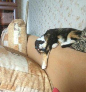 Кошка, 5 месяцев