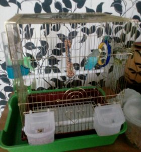 Продаю попугая