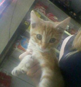 Котёнок friskies