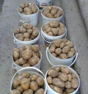 Картофель свежий Домашний