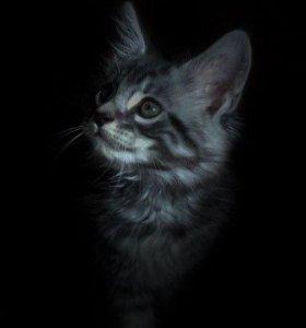 Котята кунята