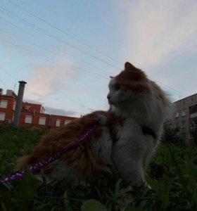 Отдам кота в хорошие руки СРОЧНО!!!