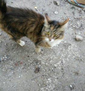 Кошка,без блох,с прививками