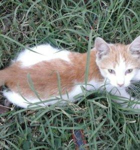 Белый котенок с рыжей спинкой