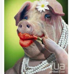 Домашняя свинина