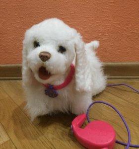Интерактивная игрушка собачка на поводке FurReal