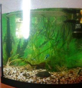 Продам полный аквариум !!!!