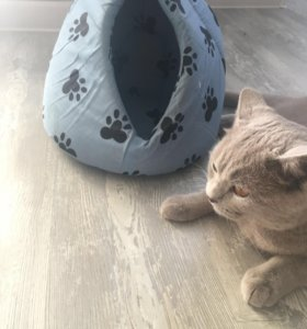 Домик для котёнка