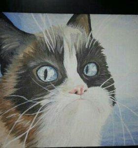 Картина на холсте.Grumpy Cat.