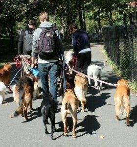 Услуги выгульщика собак