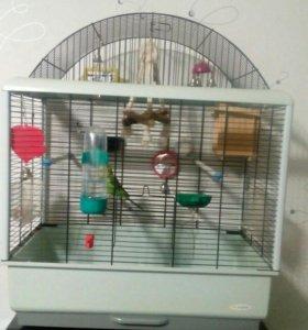 Продам клетку с волнистым попугаем
