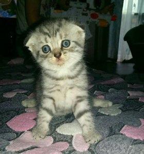 Вислоухие и прямоухие плюшевые котята