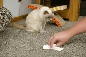 Устраню запах домашних животных