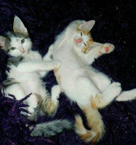 Котята мальчики в добрые руки