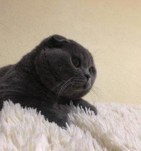 Опытный кот