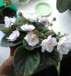 Цветок с горшком