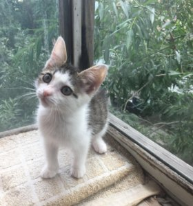 Чудесный котёнок в дар