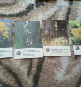 "Коллекция ""цветы"" календарики 1981-1986гг."