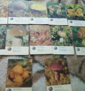 """Коллекция """"грибы"""" календарики 1986-1987гг."""
