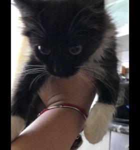Срочно! Котёнок в добрые руки!