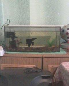 Аквариум с рыбками + маточник для развода