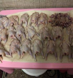 Мясо индюков, кроликов, гусей, перепелок
