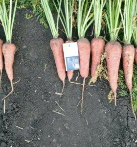 Продаю морковь