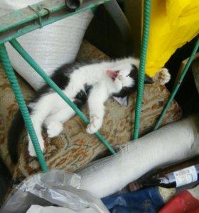 Котята от лесной кошки.