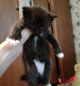 Отдам даром котят,к лотку приучены,кушают всё.