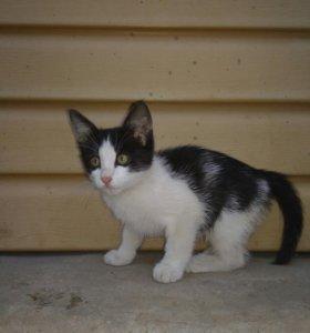 Котенок (кошка)