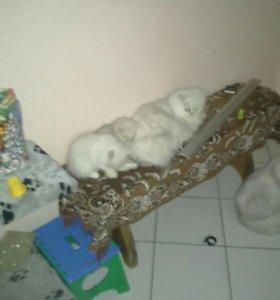 2 котика осталось