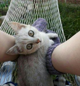 Отдам котенка в добрые руки.Мальчик