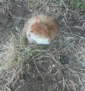 Кошка(рыжа-белая)