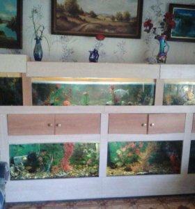 Аквариум с рыбками полный комплект