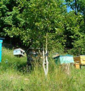 Мед цветочный (разнотравие)