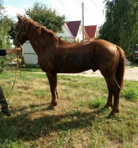 Лошади Жеребцы