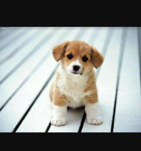 Могу погулять с собачкой