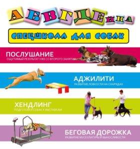 Спецшкола для собак