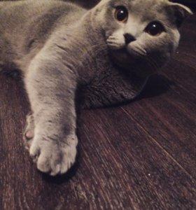 Красивый котик ищет подружку