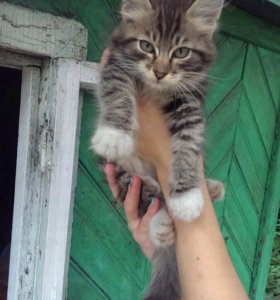 Котята пушистики