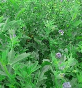 Люцерна сено продаётся