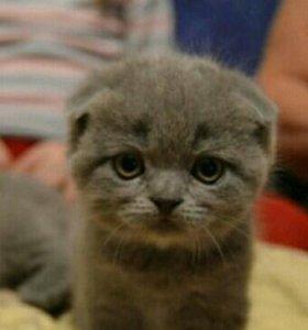Очень красивый вислоухий котик плюшевый