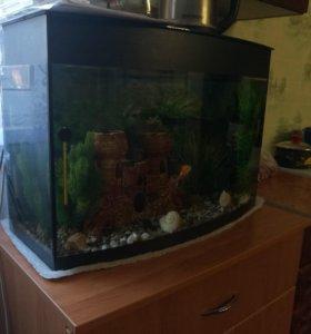 Аквариум с атрибутикой и рыбками