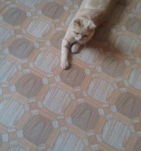 Кот даром