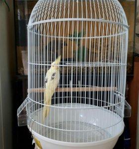 Клетка + попугай