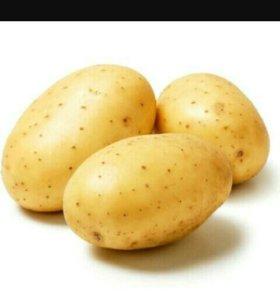 Картошка свежий урожай