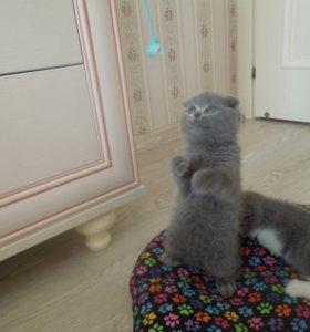Плюшивые котята