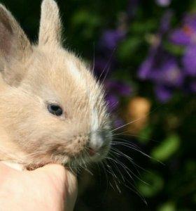 Кролики карликовые с клеткой
