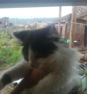 Красивые игривые котята