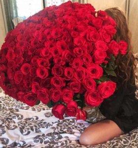 Розы разных сортов и цветов